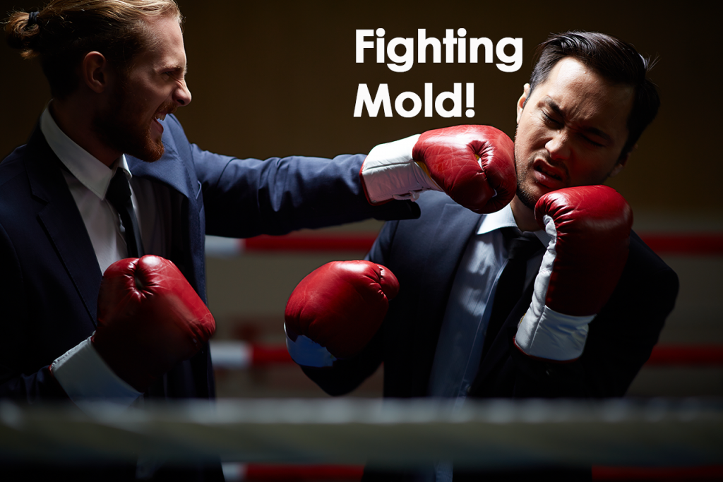 Fighting Mold - Mokher Plumbing