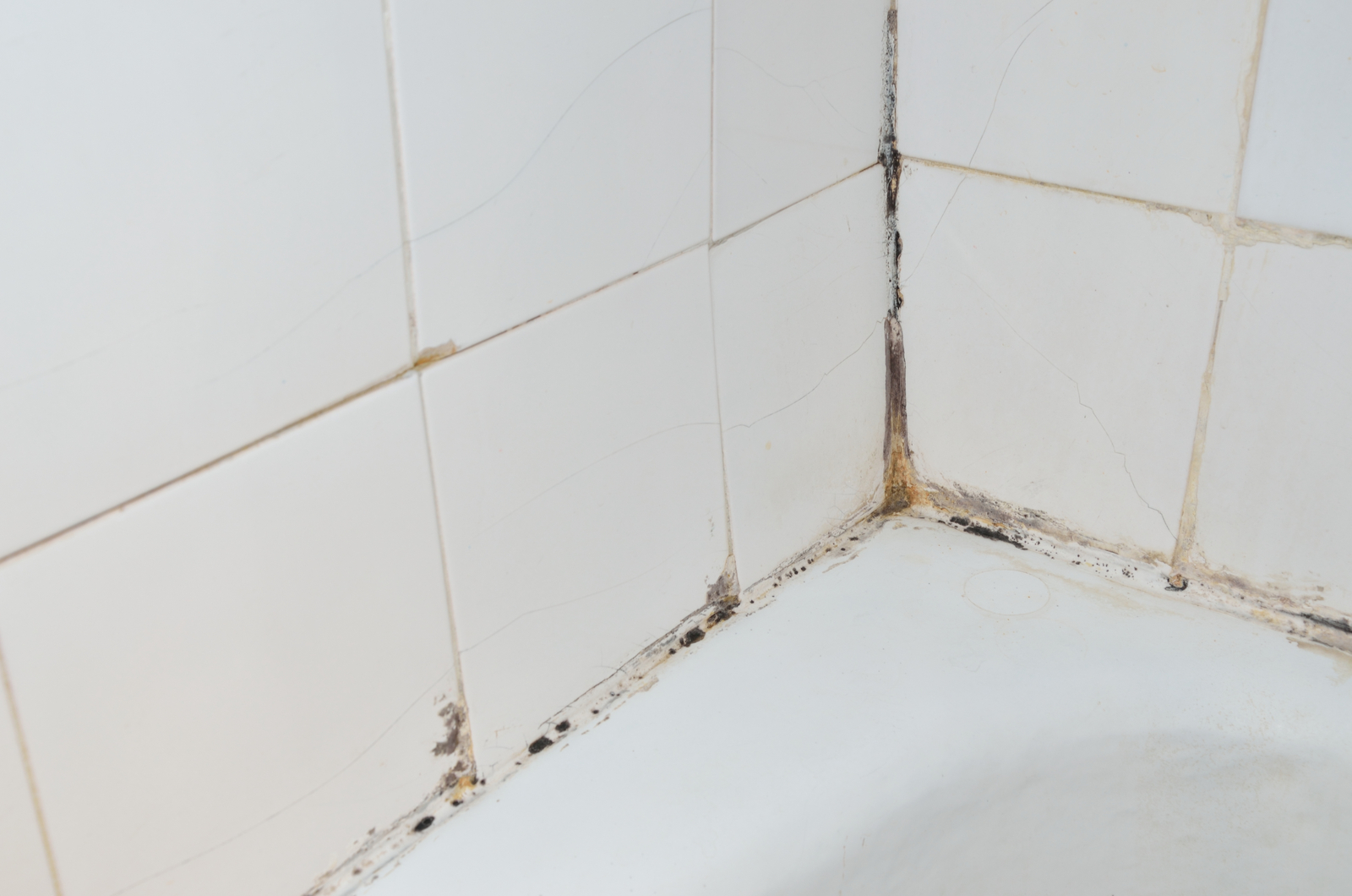 How to Prevent and Remove Bathroom Mold - Mokher Plumbing